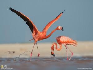 flamingo-ria-lagartos_1600