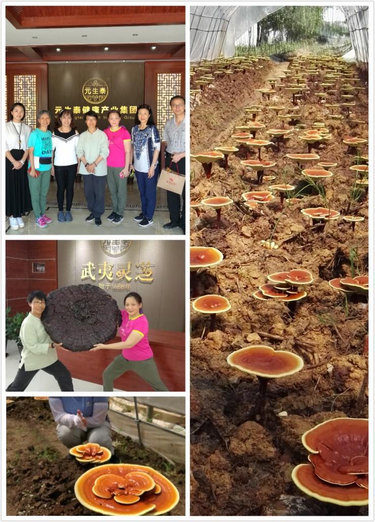 Visit to the Yuan Ecology Ganoderma Health Park
