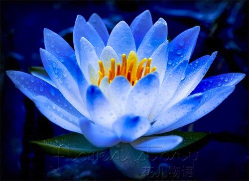Lotus2