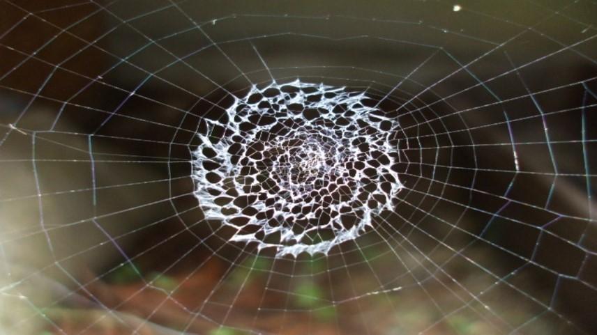 Web_Picture