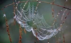 Web_Picture4
